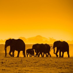 Amboseli Wildlife Safari